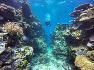 explore-the-reef