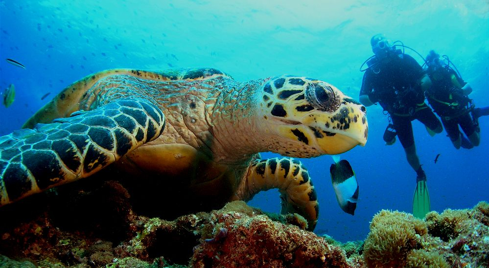 Snorkel and Dive Tours