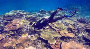 Freedive the reef