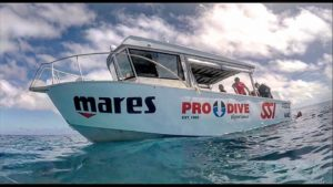 MAKO - Pro Dive Magnetic Island